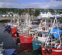 Reform of the Common Fisheries Policy