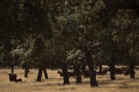 Coopérative de production animale et communauté d'irrigation à Cordoue, en Espagne