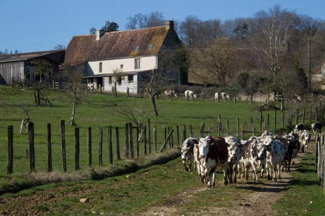 Organic agriculture in France