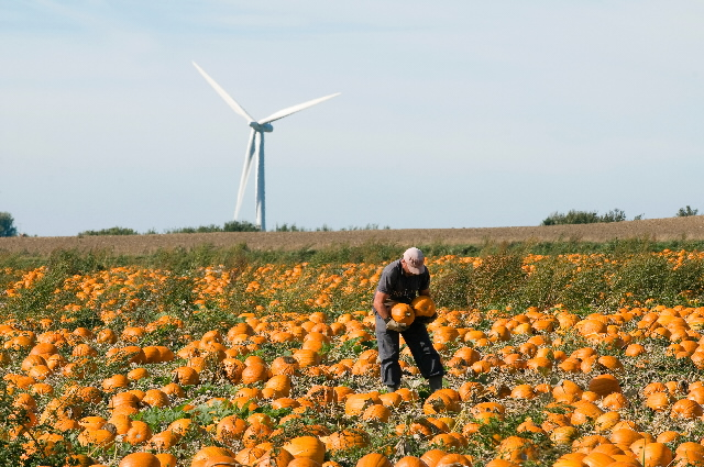 A farmer in a pumpkin field with a wind turbine in the second ground © EU