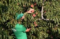 Asepop Velventos agricultural cooperative, Greece