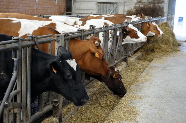 Visite de Dacian Cioloş membre de la CE, à la ferme Flabat