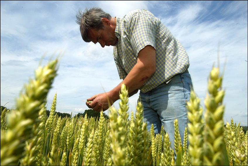 Scènes de la vie quotidienne dans une exploitation agricole