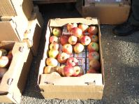 SLOVENIA: Smuggled cigarettes hidden under apples, 2009