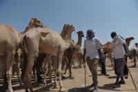 European development cooperation in Somalia