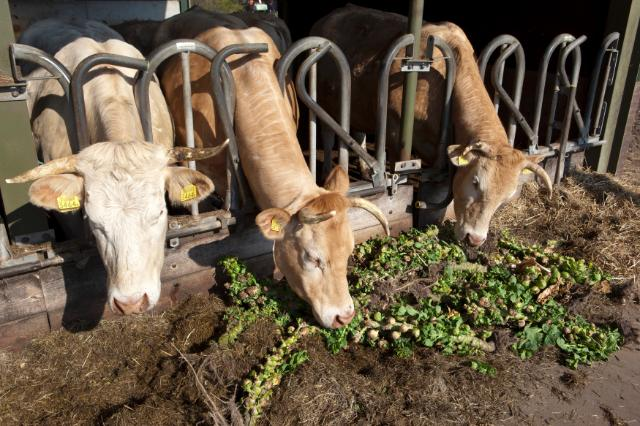 Organic agriculture in the Netherlands