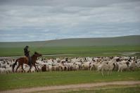 Mongolia: helping herders stay informed