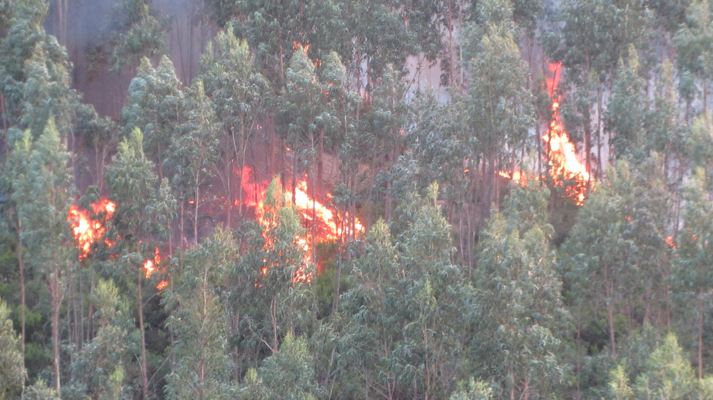 a study on forest fire causes and effects Free essay: forest fire: causes and effects ron hilton national american university one morning you wake up and look out the window off to the west, you see.