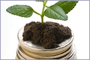 Coins and plant © Thinkstock