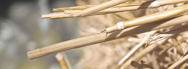 Second generation biofuels ready for roll-out | Energy