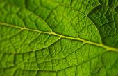 Romanian eco-innovation support scheme aims for green patents
