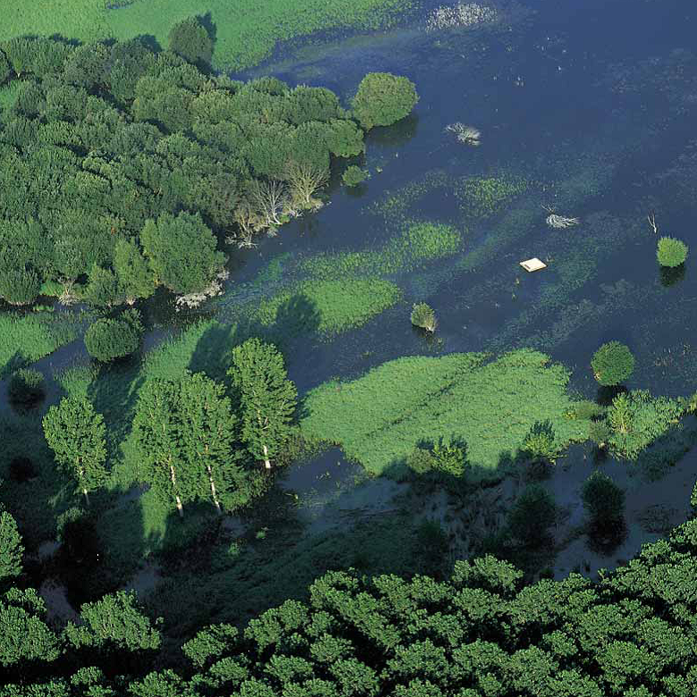 The Salburua Wetlands – home to endangered species such as European mink – seen from the air.