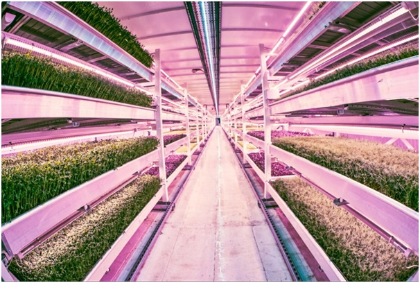 The Growing Underground subterranean farm. Pic courtesy of growing-underground.com