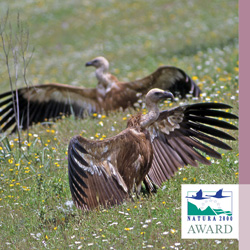 Vultures: Providing Gains for Natura and Communities