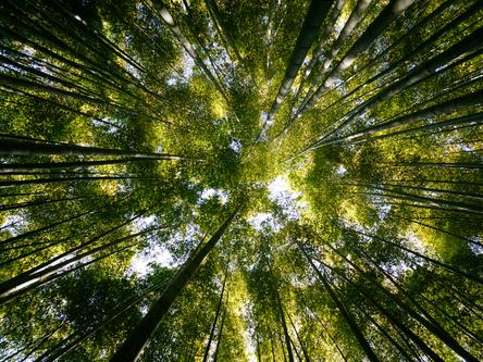 Image illustrating a forest - © Taesik Park / Shutterstock.com