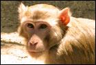 Non-human primates home