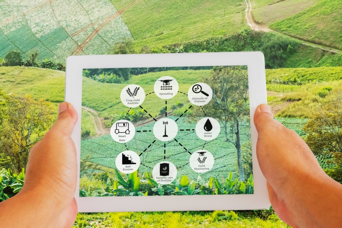 looking on a field trough tablet that shows agricultural user interface