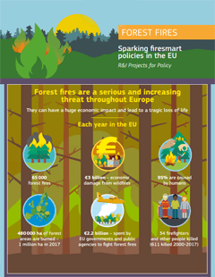 Forest fires infographic
