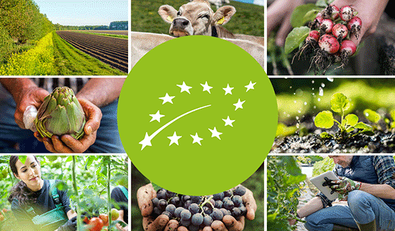 Food for Europe podcast