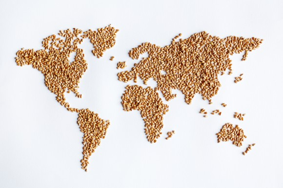 Map of world recreated with seeds
