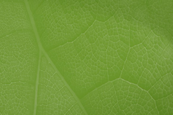 Green designed image with leaves texture
