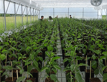 Young trees in the project greenhouse ©Technical School of Virovitica