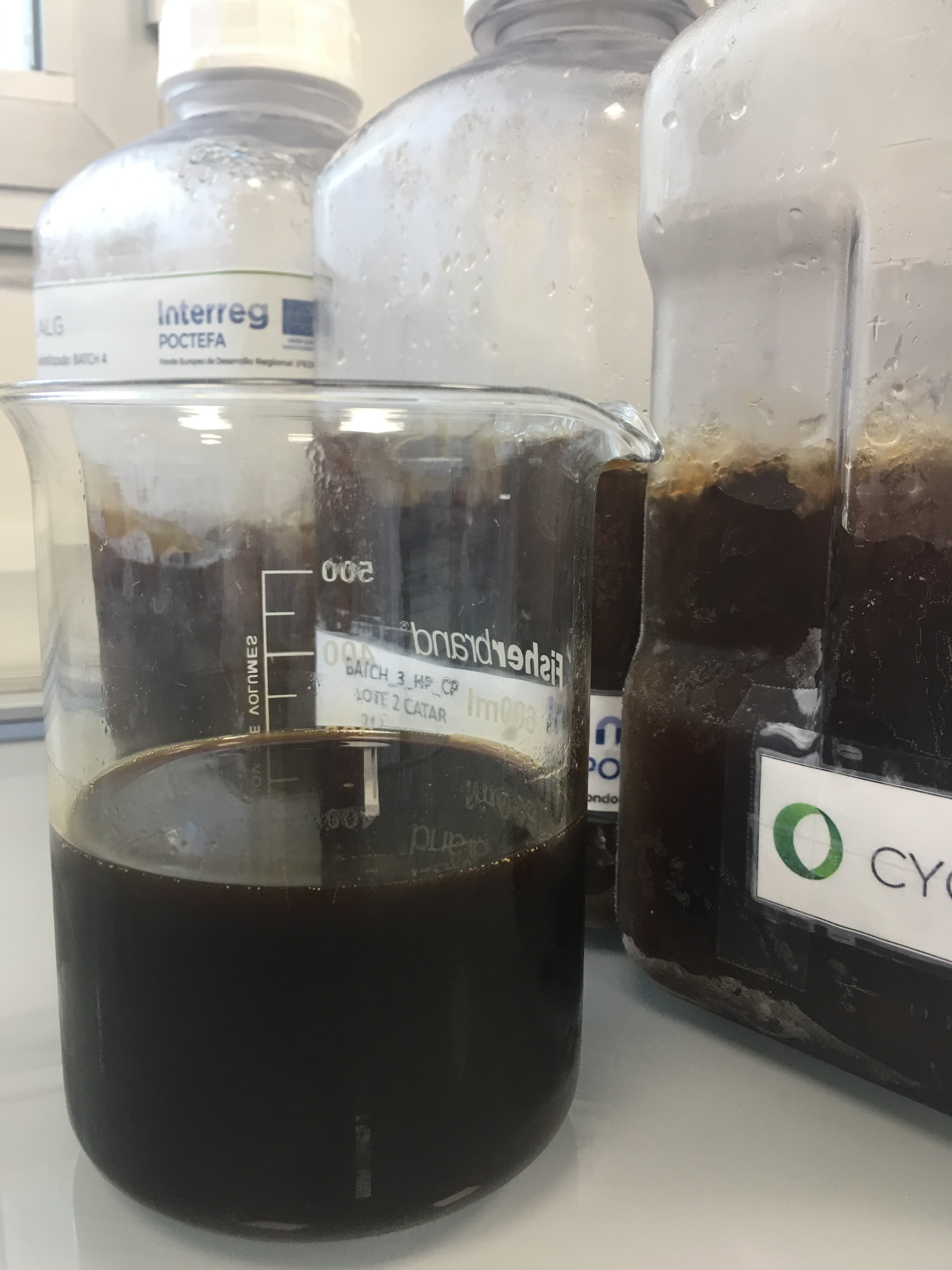 Harvested microalgae biomass obtained at pilot plant in the Cyclalg Project ©Sonia Castañón de la Torre, 2018