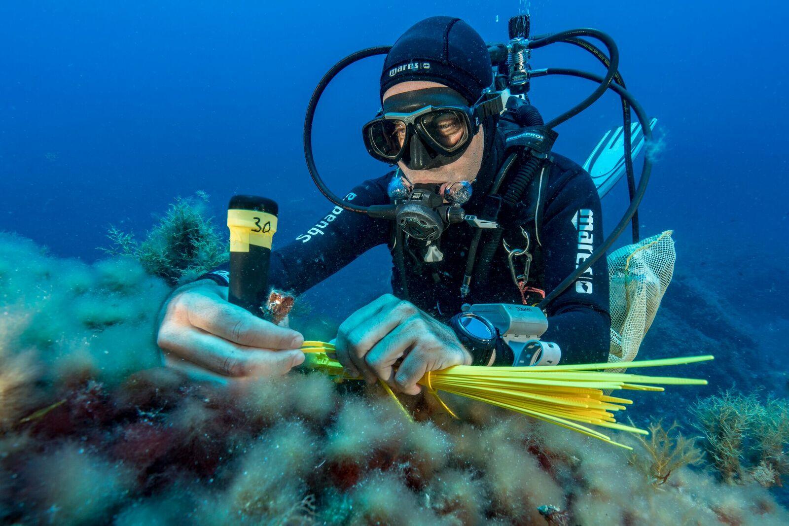 Monitoring activities at Scandola MPA, Corsica ©Alexis Rosenfeld