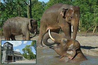 The Szeged wildlife park has constructed an Asian elephant exhibition  ©Robert Veprik/Fingerprint Kft. and Szeged Zoo