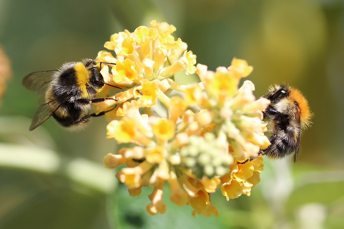 Pollination, it's a buzzy job but someone's got to do it