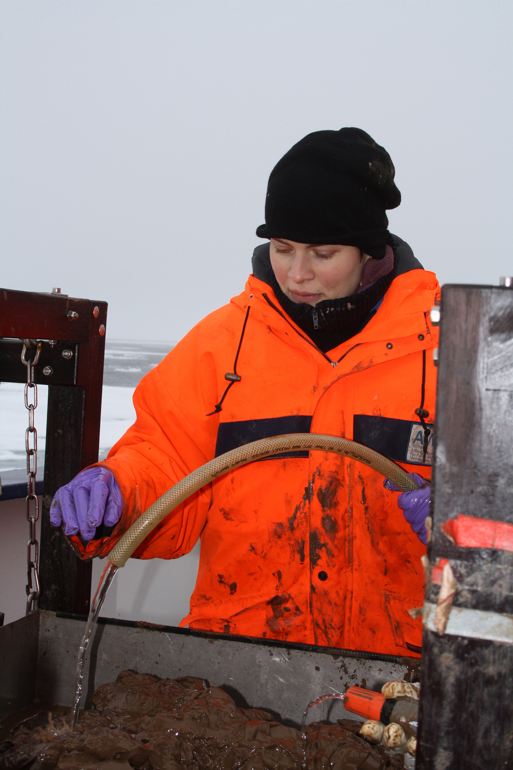 Deep sea researchers find starfish, sea cucumbers, crabs and many other animals in the mud. Photo: Antje Boetius, AWI