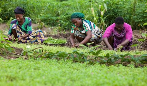 The EUTF launches GrEEn, a project to create green jobs for at least 5,000 people in Ghana