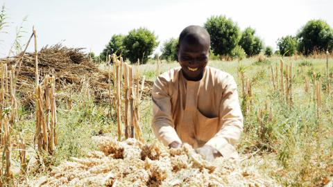 43-year-old Tijani Mohammed spreading out his stalks of millet on the ground